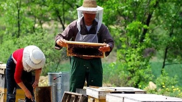 蜂蜜中的沉淀 袋装蜂蜜 蜂蜜比糖甜 到超市买蜂蜜如何鉴别真假 蜂蜜结晶很硬