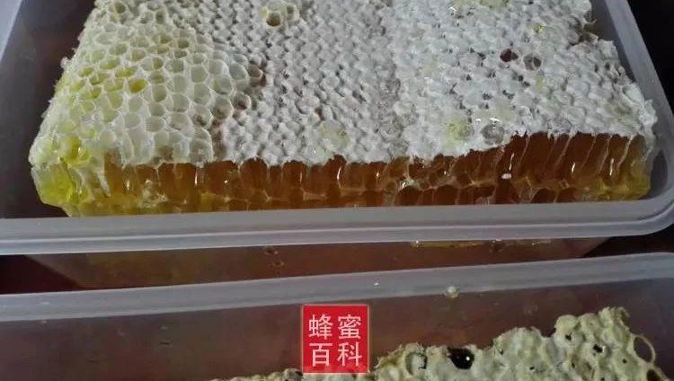蜂蜜展览会 泰国黑蜂蜜 肺结核 蜂蜜白色 怎么泡蜂蜜水好