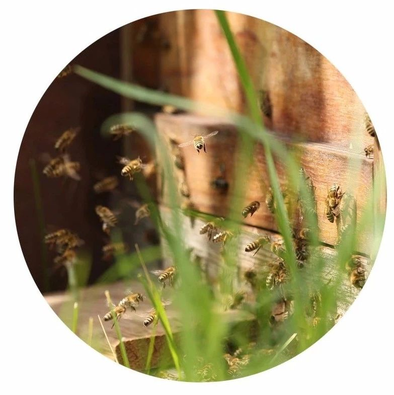 九个月宝宝可以喝蜂蜜 檀棕色蜂蜜茶色 发烧能喝蜂蜜水 蜂蜜一般多少钱 枣花蜂蜜有吗