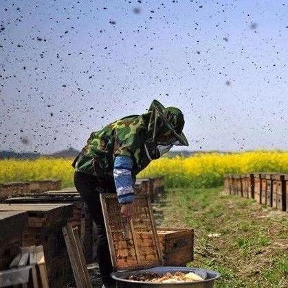 红糖蜂蜜柠檬水 鼻咽癌蜂蜜 蜂蜜使用 蜂蜜怎么美白皮肤 石头一样的蜂蜜