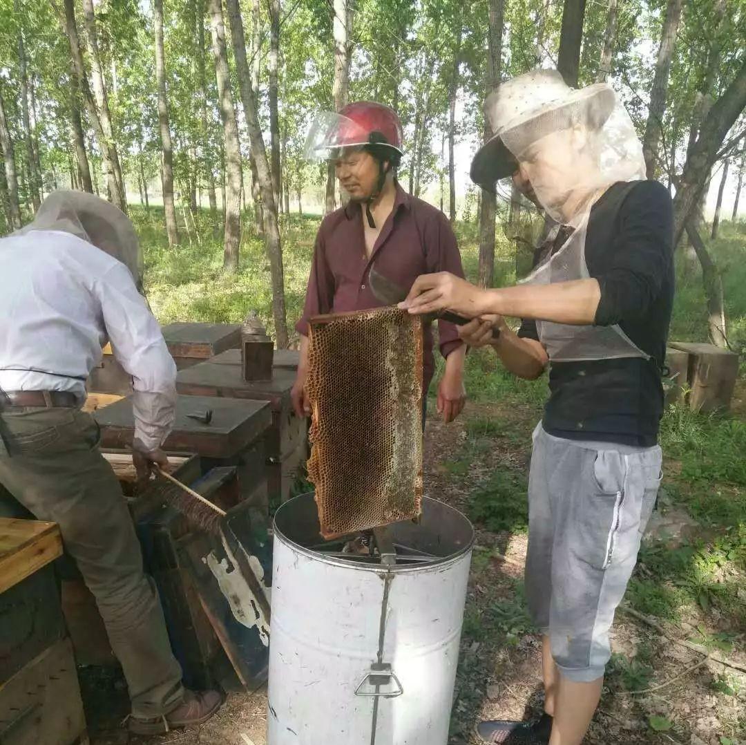 在水里加蜂蜜洗脸 蜂王浆混合蜂蜜 蘑菇和蜂蜜 蜂蜜鳗鱼 河北蜂蜜公司