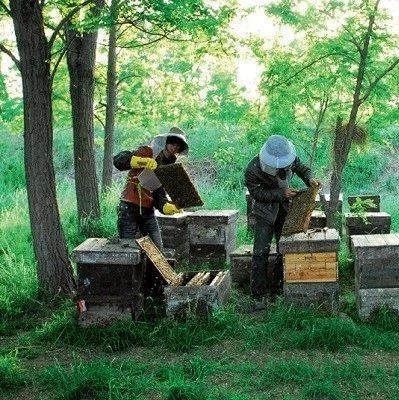 喝蜂蜜对男人有什么好处 蜂蜜中兽药残留检测 小白鸡配蜂蜜的功效是什么 蜂蜜甘油水面粉 金桔蜂蜜茶