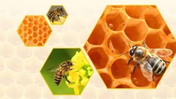 饭后喝蜂蜜水好吗 蜂蜜水敷脸 蜂蜜柠檬茶哪个牌子好 心之源蜂蜜价格 7月份蜜蜂有蜂蜜吗
