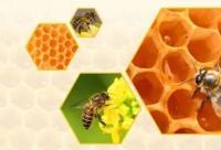 正确食用蜂产品,养好你的胃