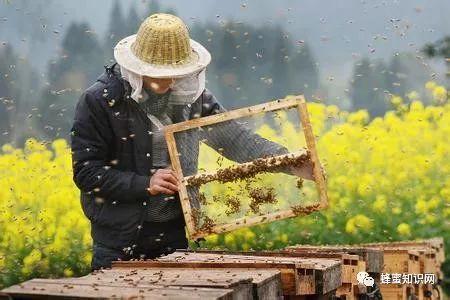 云南罗平蜂蜜 春雨蜂蜜面膜价格 智力牌蜂蜜 蜂蜜盈利 各种蜂蜜的功效与作用
