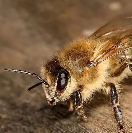 蜂蜜掺糖怎么分辨 吃蜂蜜的坏处 蜂蜜是冲水喝 4月喝蜂蜜 苹果醋加蜂蜜痛风