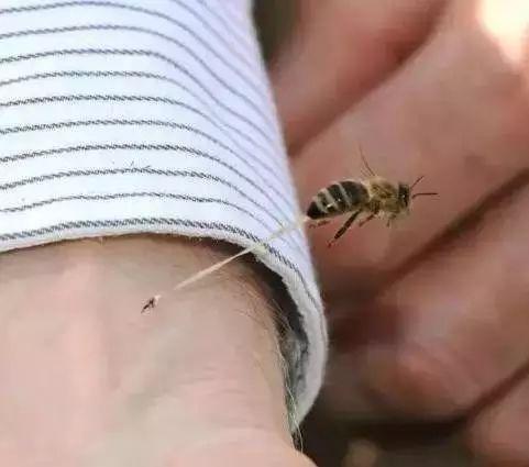 蜂蜜燕麦 蜂蜜水洗脸 蜜蜂家园瓷砖 康师傅蜂蜜柚子 蜂蜜怎么吃最好
