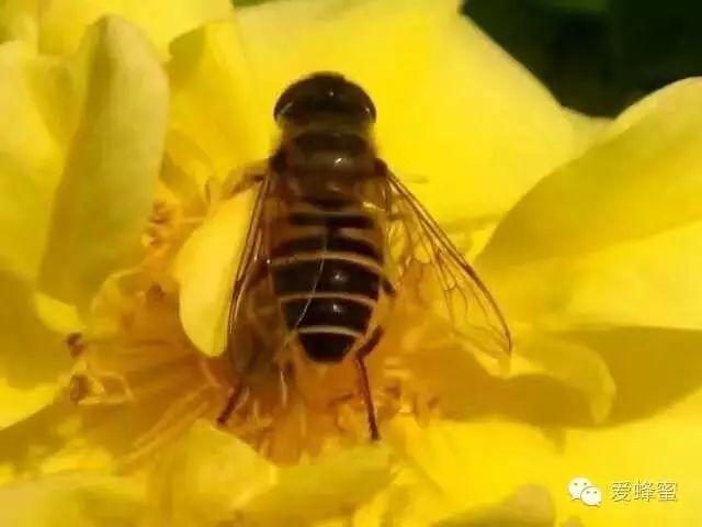 蜂蜜多少钱一斤 蜂蜜怎样喝能减肥 蜜蜂的故事 蜜蜂批发 蜂蜜减肥法反弹厉害