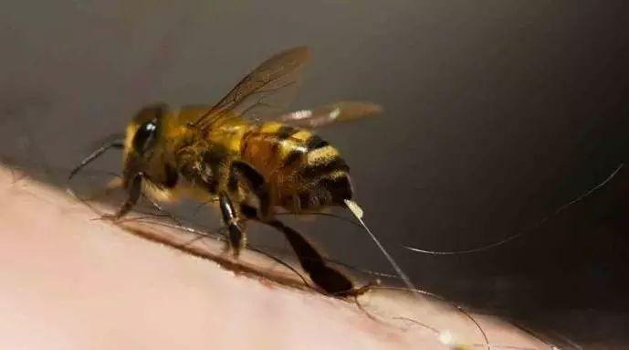 蛋清蜂蜜面膜 白醋蜂蜜水 蜂蜜祛斑吗 蜂蜜加醋的作用与功效 蜜蜂蛰了怎么