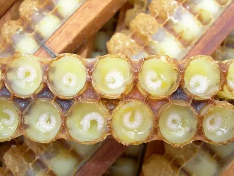 关于蜂胶你该知道的那点儿事