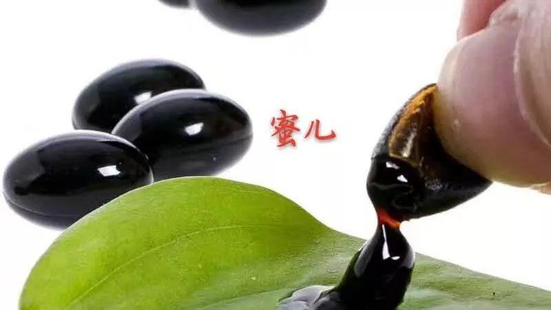 蜜蜂酿蜜的过程 蜂蜜水如何减肥 蜜蜂的养殖视频 勤劳的蜜蜂 蜂蜜酸奶面膜的功效