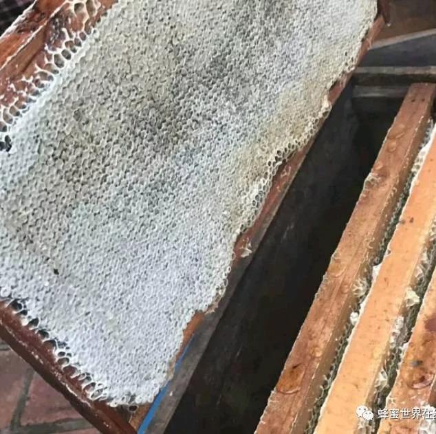 蜜蜂养殖 5 个小经验