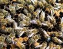 高原养蜂记