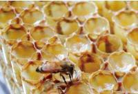为什么越来越多人要喝蜂王浆?看完你也想喝!