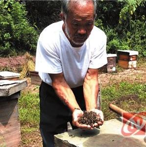 【提醒】200多箱蜜蜂一夜之间离奇死亡 三家养蜂农户血本无归