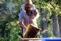 这6种养蜂人,永远赚不到钱!