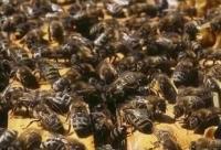防疫消毒方法在蜜蜂运输检疫中的运用