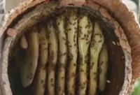 传统养蜂,必须了解的6个问题,直接关系到养蜂成败