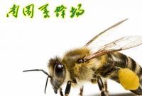 蜂胶使用的特别提醒