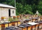 高血糖吃蜂蜜 蜂蜜配生姜的作用 酸奶蜂蜜面膜 蜂蜜的副作用 自制蜂蜜柚子茶