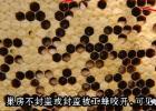 蜂蜜面膜怎么做补水 柠檬和蜂蜜能一起喝吗 酸奶蜂蜜面膜 蜜蜂养殖技术 土蜂蜜