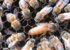 蜂蜜柠檬水的功效 什么蜂蜜好 蜂蜜加醋的作用与功效 红糖蜂蜜面膜 蜂蜜水果茶