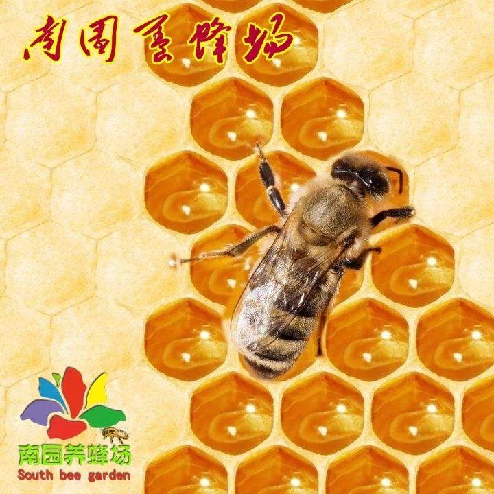 怎样凭味觉检验蜂蜜质量?