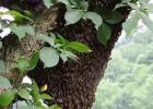 蜂蜜生姜茶 蜂蜜橄榄油面膜 蜂蜜牛奶 养蜜蜂技术视频 蜂蜜能减肥吗