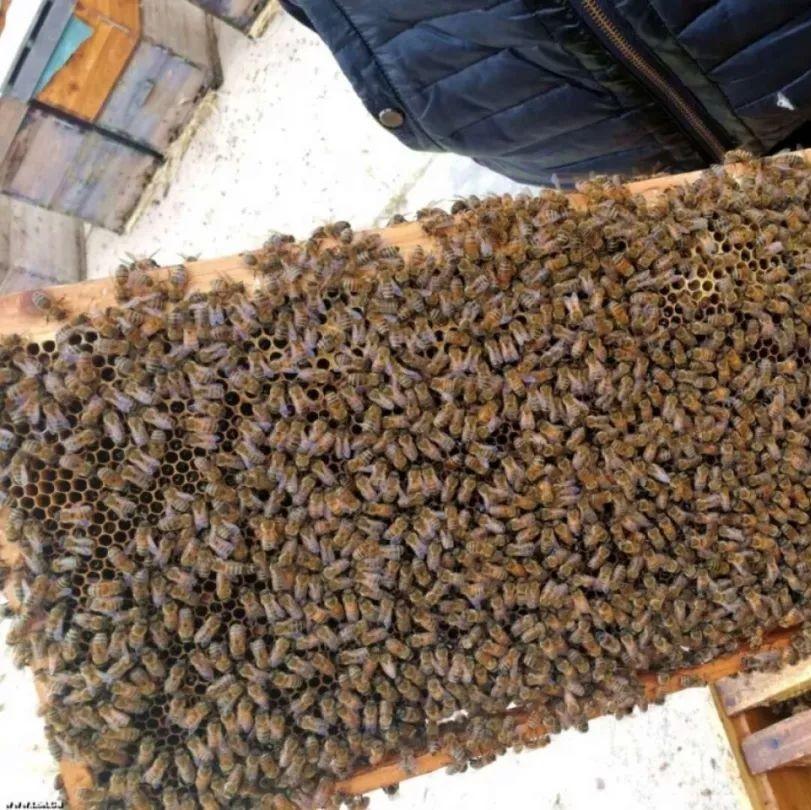 秋天开始蜜蜂合群了