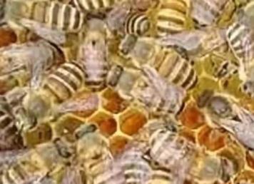养蜂没那么难,把好几个关键就行了