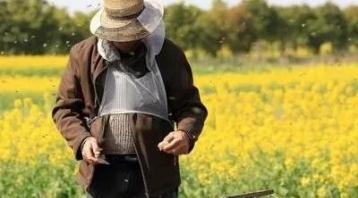 养蜂人为什么越来越难,具体有哪些因素?