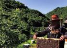 蜂蜜水果茶 生姜蜂蜜水减肥 吃蜂蜜会长胖吗 蜂蜜怎样祛斑 牛奶加蜂蜜