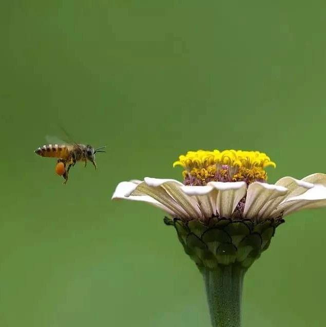 蜜蜂越冬后期管理