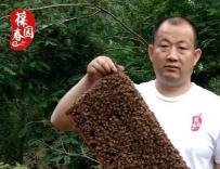 退伍不褪色----只做纯蜜好蜂蜜