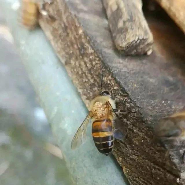 不同季节蜂群治螨的方法