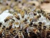 早春繁蜂如何扩大子脾