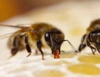 有些蜂蜜是白糖变成的,是真吗?