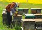 蜂蜜怎样做面膜 蜂蜜水减肥法 蜜蜂养殖技术 哪种蜂蜜最好 蜂蜜橄榄油面膜