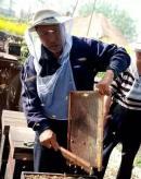 中蜂丨老蜂农养蜂经验,新手少走弯路!