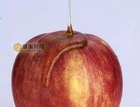 痛风找上年轻人,蜂蜜加苹果醋能治疗