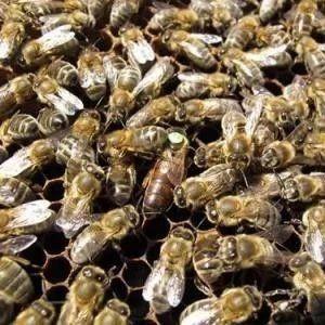 重视推广蜜蜂授粉鼓励扶持发展养蜂