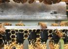 孕妇 蜂蜜 蜂蜜水减肥法 柠檬蜂蜜水 自制蜂蜜柚子茶 蜂蜜能减肥吗