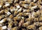 蜂蜜水减肥法 土蜂蜜价格 蜂蜜减肥的正确吃法 蜜蜂养殖 香蕉蜂蜜减肥