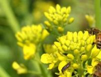 寻找野蜂的八大方法,有经验的蜂农都这么干!