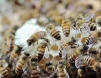 蜜蜂病虫害的防治技术