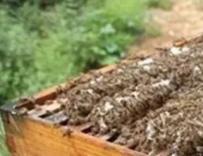 秋末冬初蜂群该这样管