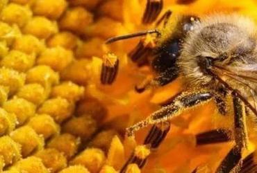 通过这三关,才是好蜂胶——如何甄别好蜂胶