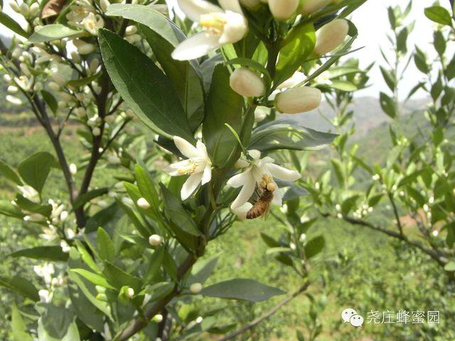 带你走进---山里桔子花的蜂场