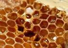蜜蜂病虫害防治 蜂蜜白醋水 洋槐蜂蜜价格 蜂蜜的吃法 蜂蜜加醋的作用与功效