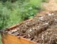 浅谈蜂群越冬的温度和包装的关系